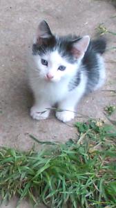 Cute Kittens Ballarat Central Ballarat City Preview