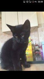 21 week old kitten