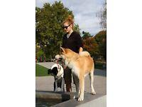 Experienced Dog Walker & Pet Sitter, Kingswood, South East Bristol