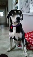 "Adult Female Dog - Hound: ""Honey"""