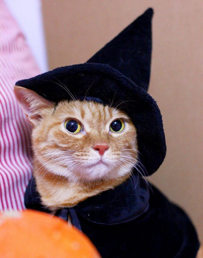 Black Cat Dog Halloween Costume