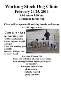 Working Stock Dog Clinic