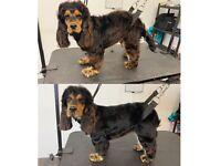 Dog grooming dog groomer