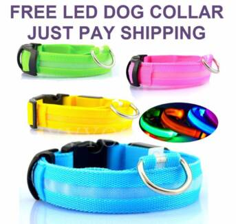 FREE - LED DOG COLLARS BRAND NEW