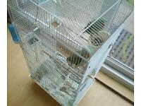 Alexandrines for sale with big cage