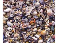 Original, unique Hebridean shells canvas print (40 cm x 30 cm)