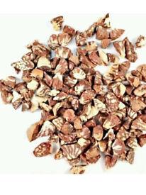 Cracked pieces of betel nut SUPARI