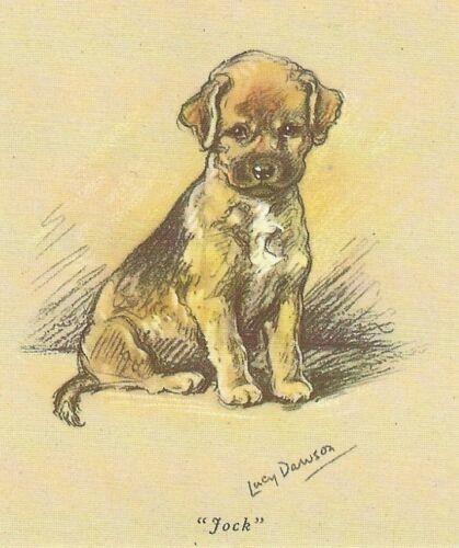 Border Terrier Puppy - MATTED Dog Print - Lucy Dawson