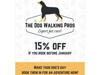 Professional Dog Walking, Daycare and Boarding Services for Henfield and the Surrounding Areas