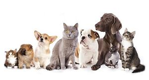 Pet Sitter Available