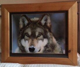 Beautiful wolf print