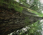 Turning Timbers