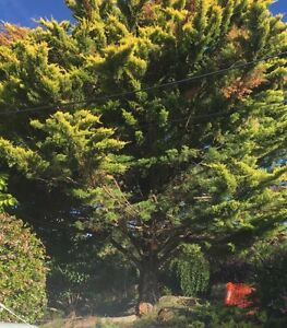 Need Tree Removed Happy Valley Morphett Vale Area Preview