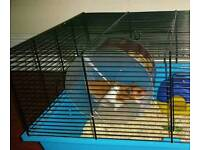 Hamster with cage and other stuff