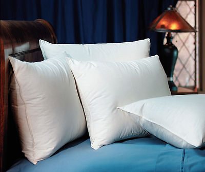 Pacific Coast Hilton Hotels Touch Of Down Standard Pillow  Set Of 2 Pillows
