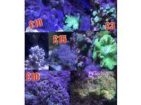 Marine corals many different ones Check description