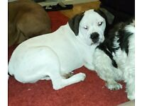 Bruce AB puppy