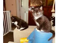 Kittens with a delivery