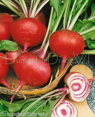 Organic BEET Tall Top Early Wonder Heirloom 70+ seeds sweet Great greens NON-GMO