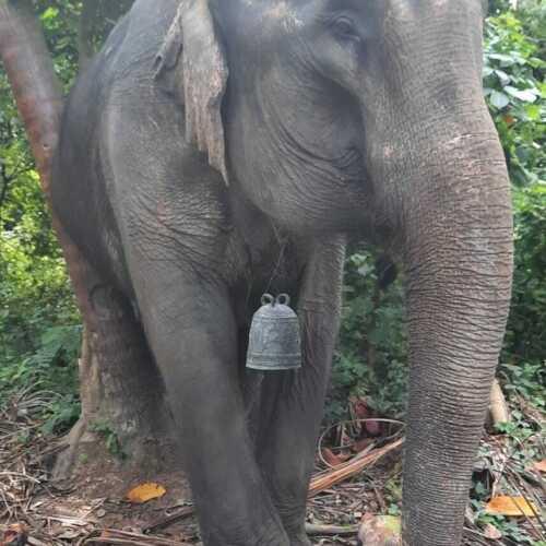 "Antique elephant bronze""bell""rare vintage 9.5""high home/shop decor add feng shui"