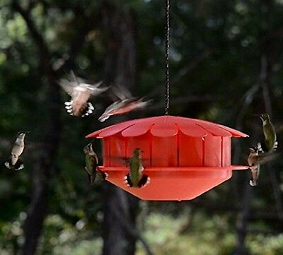 Humm-Bug NO NECTAR HUMMINGBIRD PROTEIN FEEDER, Made in the USA