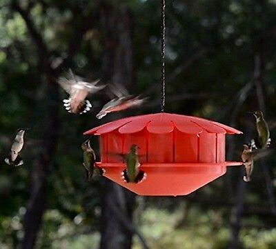 Humm-Bug NO NECTAR HUMMINGBIRD PROTEIN FEEDER, Made in the USA