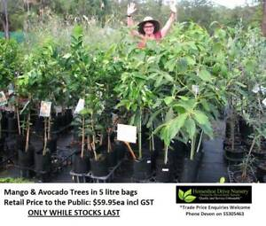 Mango & Avocado Trees Plants Mudgeeraba Gold Coast South Preview
