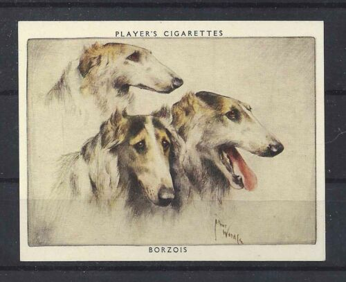 1939 Arthur Wardle Dog Portrait Player Cigarette Card BORZOI RUSSIAN WOLFHOUND