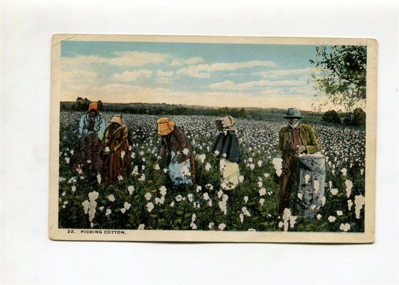 Black working in cotton field  (mint split back 0 written message) Post Card