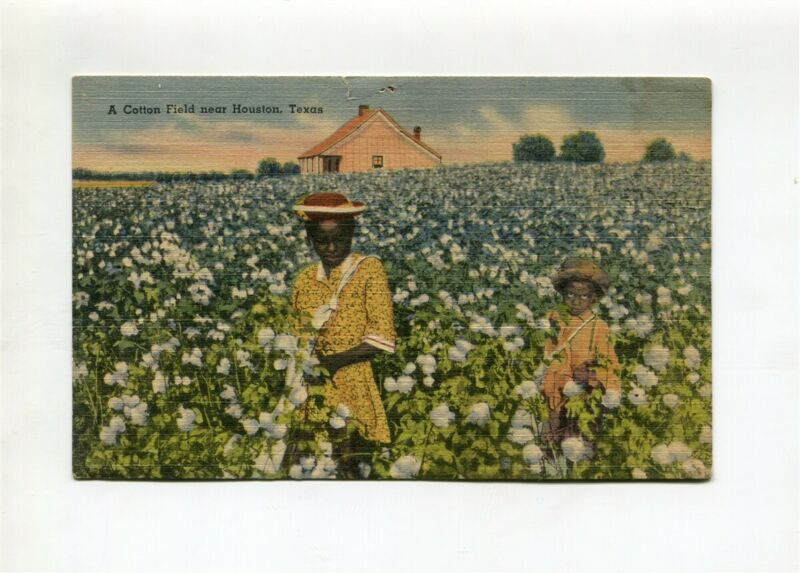 Cotton Field Post Card Black (USED) 1944
