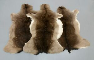 Fallow Deer Stag Skin Rug Hide Fur Taxidermy Home Decor Fireplace Trophy