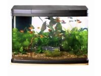 64L Panorama fish tank - curved glass