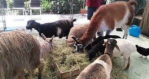Mobile Farm / petting zoo Elimbah Caboolture Area Preview