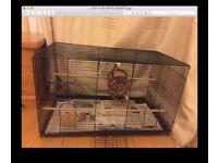 2 budgies with large cage and toys for sale 60 pounds