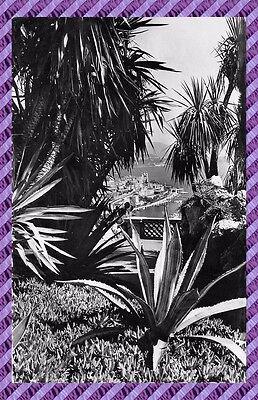 Cpsm   Garden Exotic Monaco
