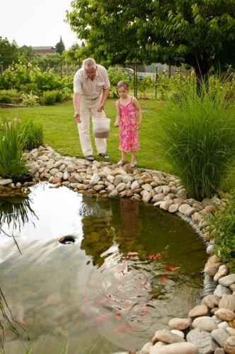 Wissenswertes über den Einsatz von Starterbakterien in Ihrem Teich