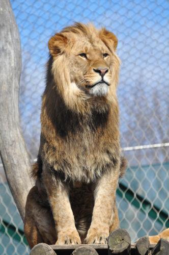 Für jedes Bundesland die passenden Eintrittsgutscheine für Tierparks finden