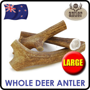 3 x LARGE DEER ANTLER WHOLE CHEWS FOR ADULT DOGS PUPPY DENTAL TREAT BONE