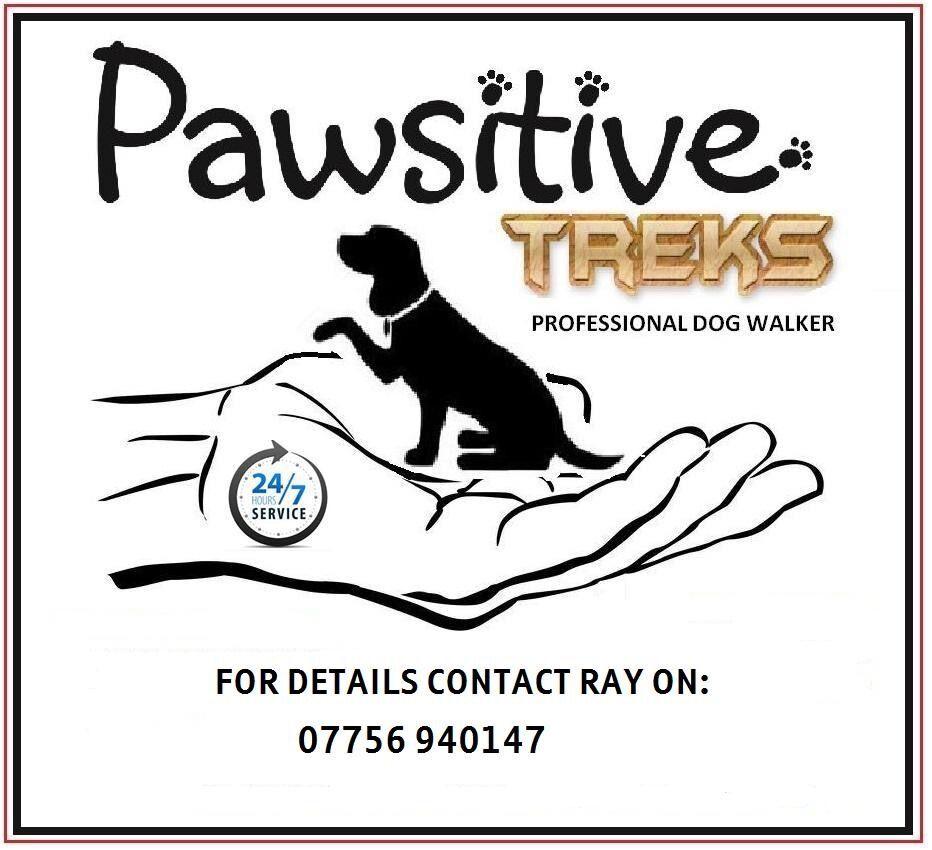 pawsitive treks dog walking dog walker service in east end pawsitive treks 24 7 dog walking dog walker service