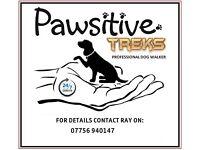 PAWSITIVE TREKS 24/7 Dog Walking/Dog Walker Service
