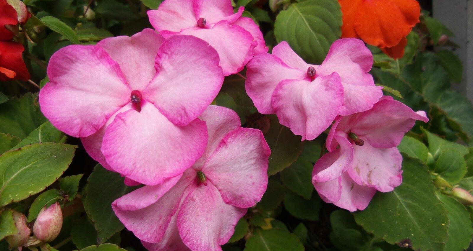 SUMMER / WINTER PLUG PLANTS