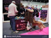 Eukanuba Discover Dogs Show
