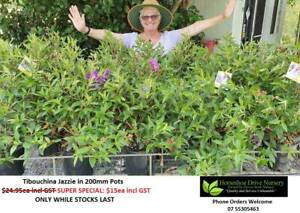 Super Specials Reduced Prices Plants Mudgeeraba Gold Coast South Preview