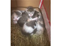 Beautiful kittens available to reserve