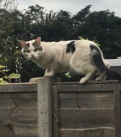 Has anybody lost this Cat?