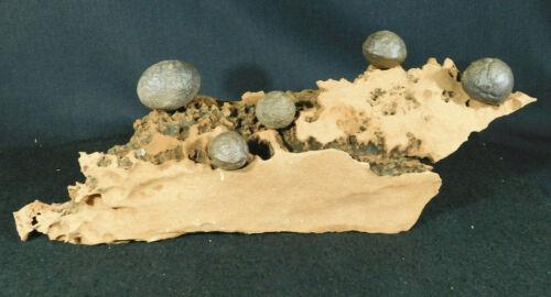 FIVE! Moqui Marbles on a Big Natural Navajo Sandstone Formation! Utah 3525gr