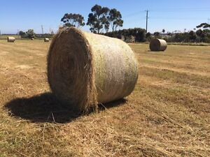 Hay bales - 5x4ft - Rye/Oaten - 100 available Wildwood Hume Area Preview