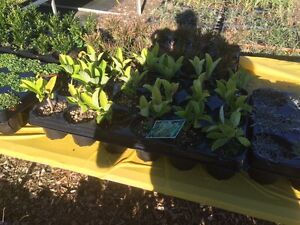 PLANT SALE Dural Hornsby Area Preview