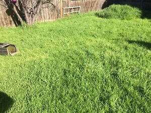 Grass Cutting From $19 Hadfield Moreland Area Preview