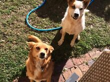 2 dogs giveaway Eastern Heights Ipswich City Preview